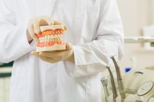 zubař s modelem lidské čelisti. zubní lékař, Český Krumlov